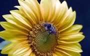 Домашний бизнес пчеловодство
