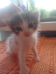 Отдаем четверых котят в очень хорошие руки в Запорожье!