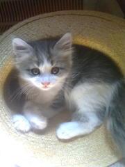 Отдам в заботливые руки котят