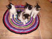 Котята бело-черные, отдам в хорошие руки
