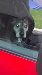 Найдена собака на правом берегу! Теперь ищем хозяев,  ответственных!