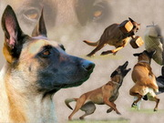 Собачья школа