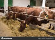 Продам коров'яче молоко