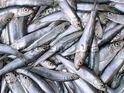 Рыба оптом дешевле,  Бердянск